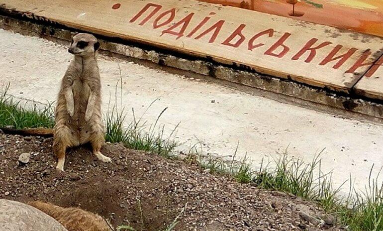 Винницкий зоопарк (Подольский)