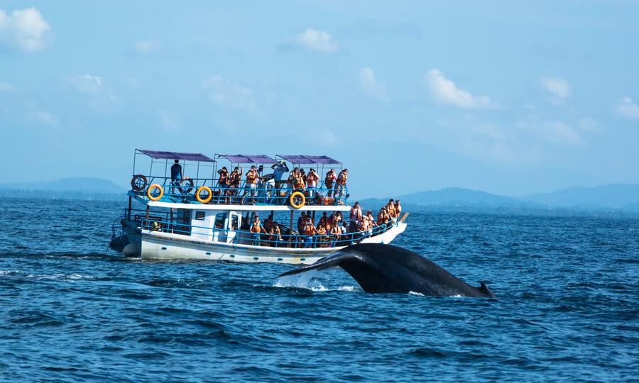 Мірісса кити