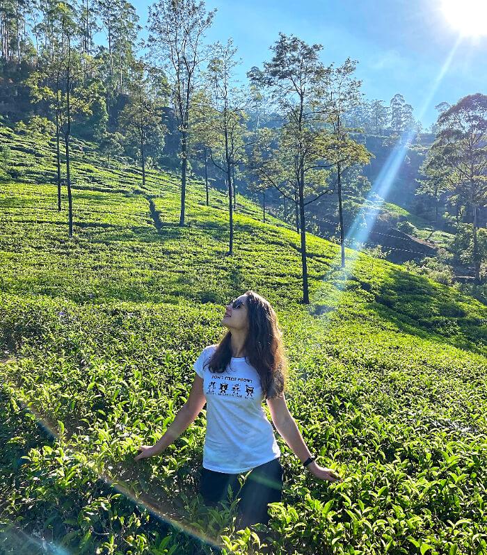 Нувара-Елія і чайні плантації