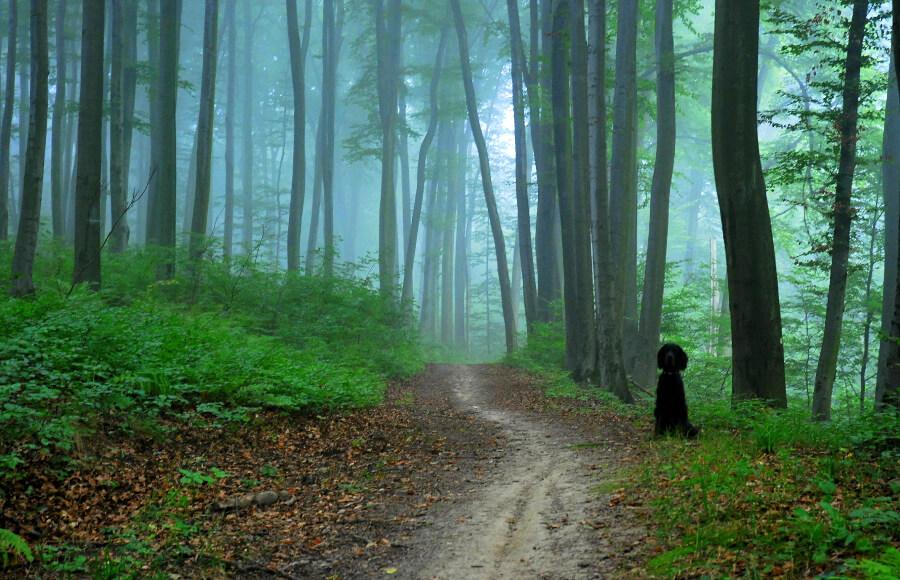 Вольський ліс